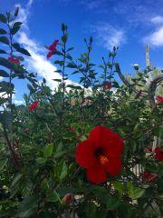 La flor más bella: Reflexiones sobre la experiencia histérica desde la Terapia Gestalt